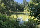 Bedrock Gardens Tour: A NH Gem